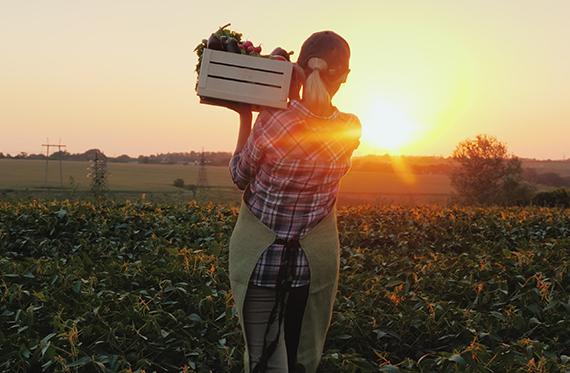 Campesino-cultivo